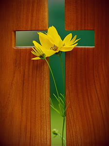 Yellow Cosmos Flower in Green Cross Wooden Decor