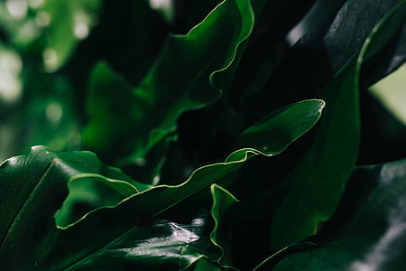 Close-ups of green plant leaves