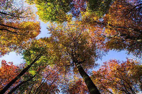 low angle photography of yellow and green trees during daytime