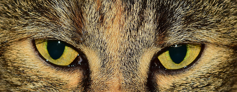 shallow focus of yellow eyes