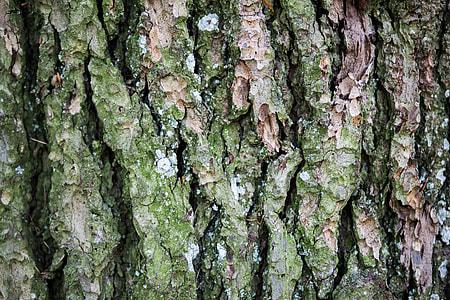 Closeup Bark Tree Forest
