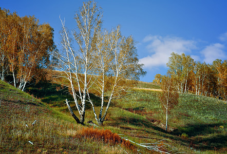 green grass hill with trees under blue sky at daytime
