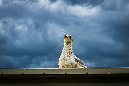 white bird on roof during daytime