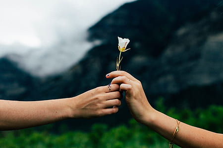 two women holding a white flower selective-focus photo