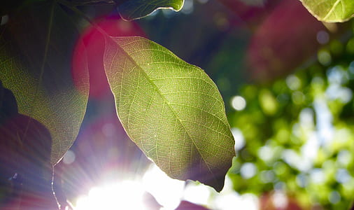 green leaf with sunlight background