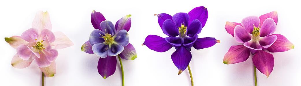 four assorted-color petal flowers