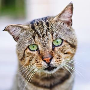 macro shot of brown and gray kitten